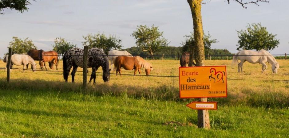 centre equestre chuelles